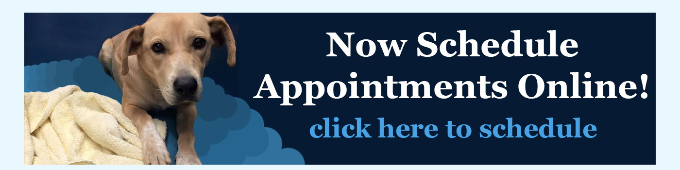 Now Schedule Appointments Online! Click here to schedule